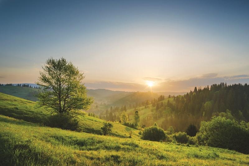 Landschaftsaufnahme eines Tals in den Karpaten im Morgenlicht mit Wiesen und Wäldern