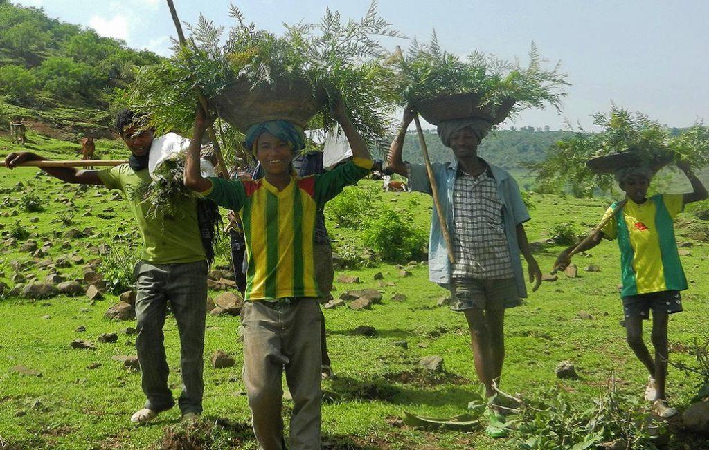 Vier Männer mit Körben mit Setzlingen am Kopf bei einem wastebox Aufforstungsprojekt in Äthiopien