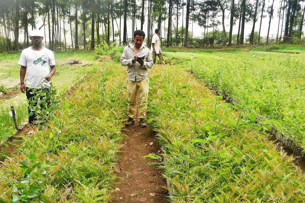 Zwei Personen beim Aufforstungsprojekt der BOKU Wien in Äthiopien.